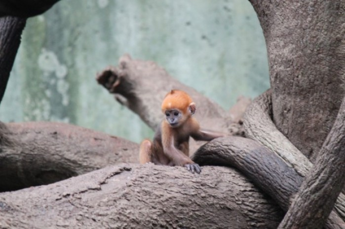 Photos New Babies At The Omaha Zoo Gallery