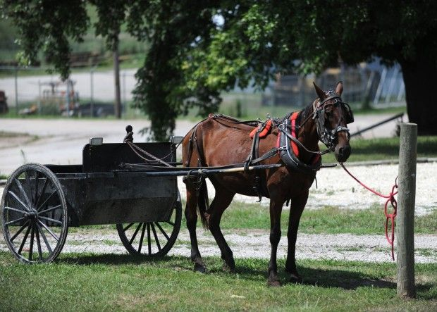 Plea Deal Reached In Amish Buggy Death