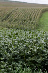 Farm forecasters expect more soybeans planted, less corn
