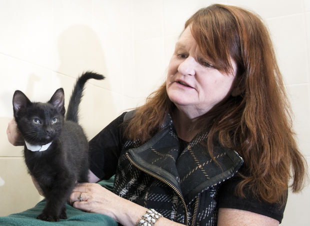 Lincoln Volunteer Could Win 25 000 For Shelter Cats