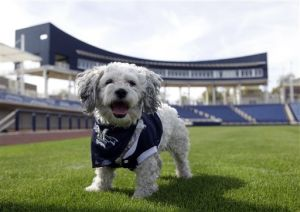 PHOTO GALLERY: Hank brings Dog Days to Brewers