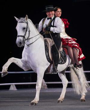 The Gala of Royal Horses showcases the exceptional courage, nobility of European horses