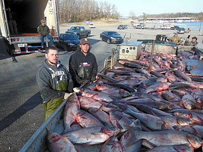 Invasive fish asian carp spawning in louisville news for Fishing in louisville ky