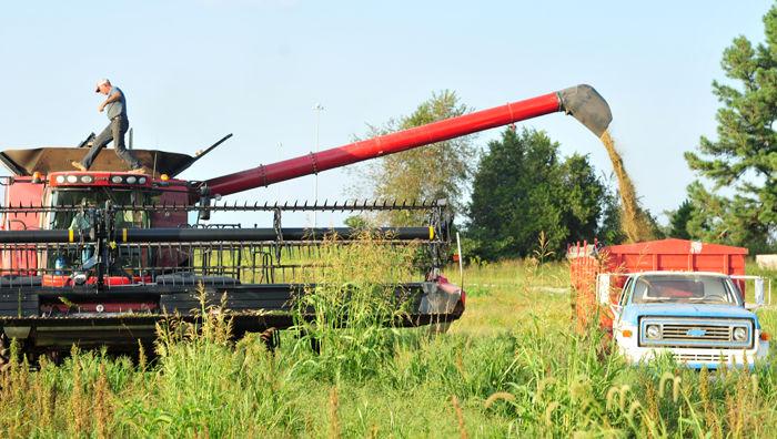 Hemp crop biggest in state