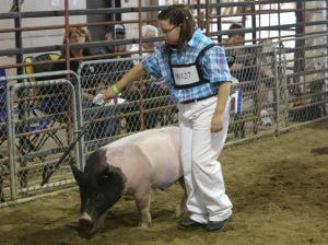 Swine ban to prompt changes at county fair