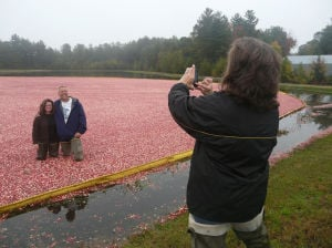 Cranberry harvesting demonstration Oct. 4 in Warrens