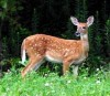Deer hunt numbers rebound; second best opener harvest since 2008