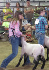 Mel-Min Show Lamb