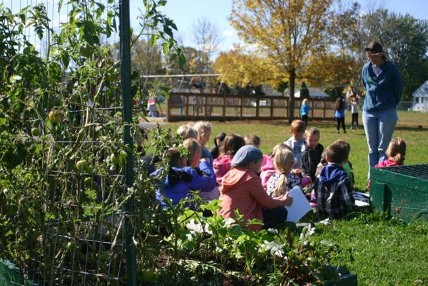 School garden growing by leaps and bounds