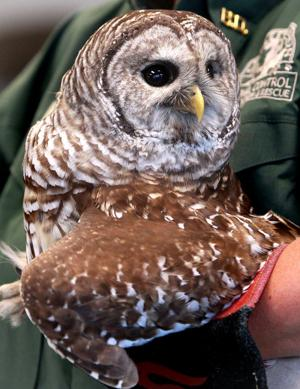 Photos: Red-Tailed Hawk and Falcon Release