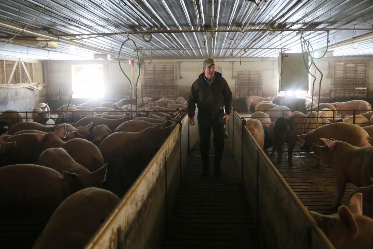 ^ Farmers push back against animal welfare laws News ...