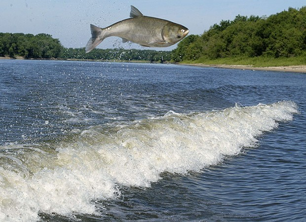 That interfere, Asian carp close the canal for