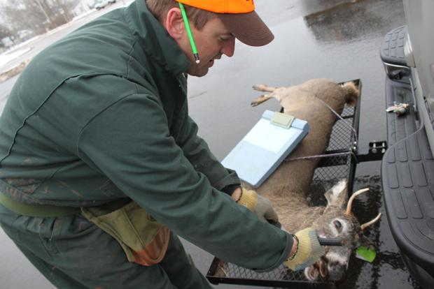 Hunters bag fewer deer over opening weekend