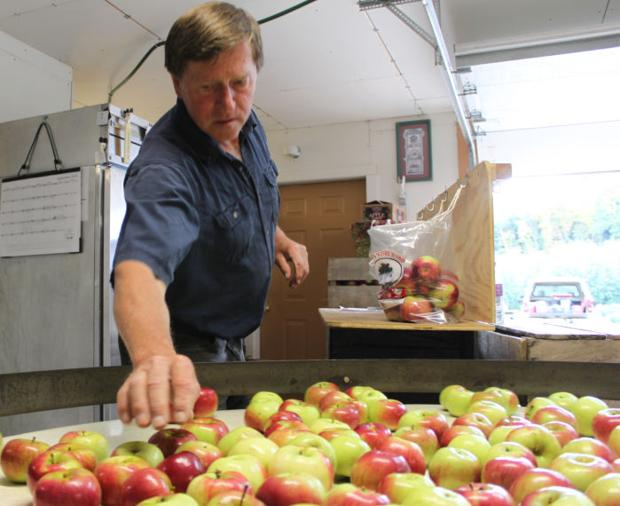 Apple growers experiencing bountiful season