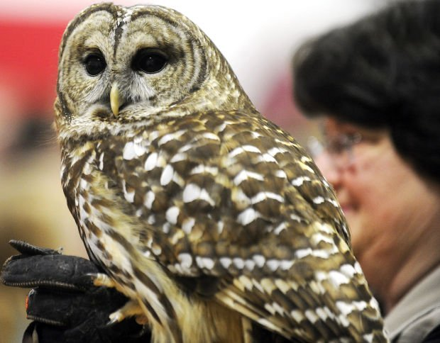 International Festival of Owls kicks off fundraising campaign for new center