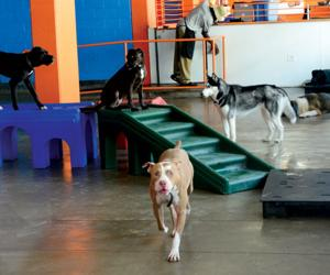 Best of downtown 2013 winners los angeles downtown news for Best dog boarding los angeles