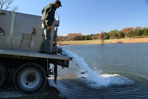 Rainbow trout stocked in st louis lakes for Busch wildlife fishing