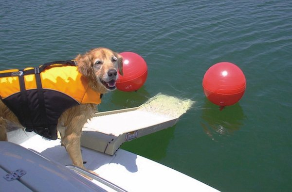 Boat Projects Ramps For Dogs Boat Projects Lakeexpo Com