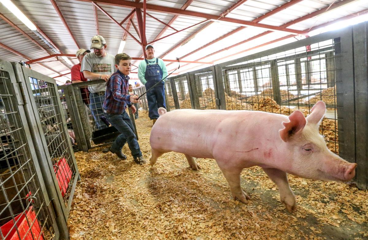 Livingston Parish 4-H/FFA Livestock Show