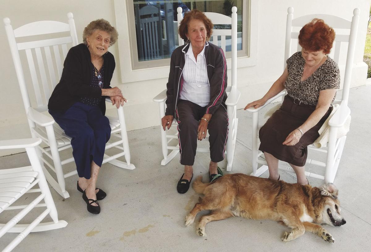 Denham animal shelter sends tail-wagging visitor to Maison de Fleur