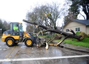 Winds, rain send trees toppling in Lodi area