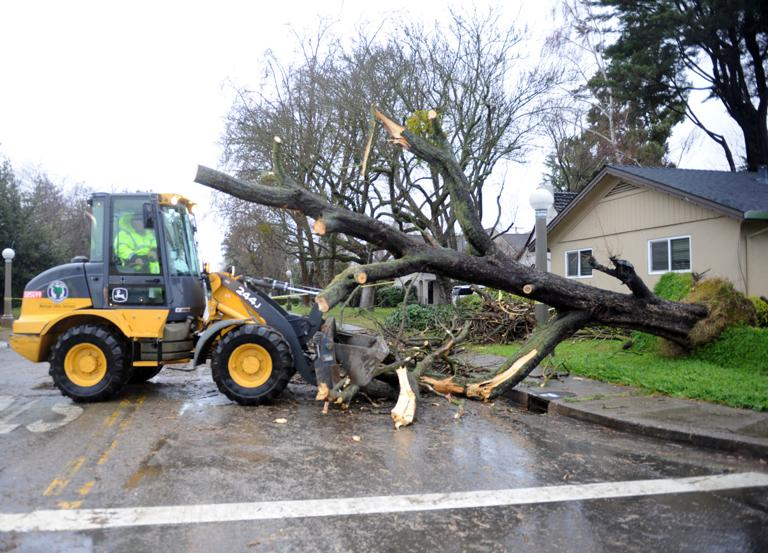 Winds, rain send trees toppling in Lodi area