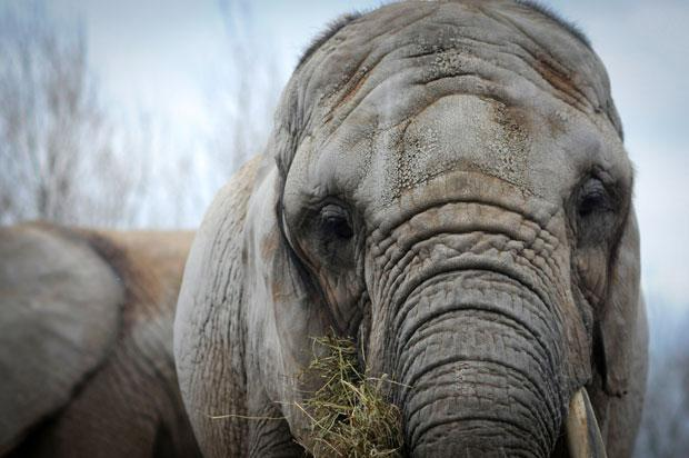 BobBarker paying up to $1 million to send trio of elephants to PAWS in San Andreas