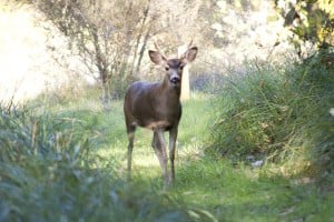 Private landowners discuss their experiences offering Mokelumne River access