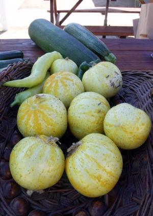 Vinewood Elementary School garden grows food, experiences
