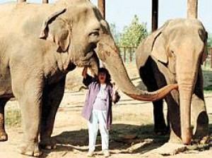 PAWS elephants celebrate 10 year anniversary