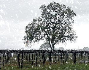 Lightning strikes in Lodi, triggering power outage