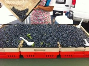 Lodi Farmers Market: It's back. It's bigger. It's this Thursday.