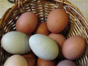 Farm-fresh eggs