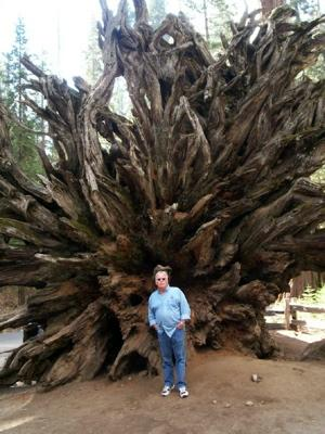 Roots in Yosemite