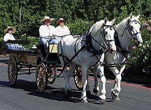 Carriage company offers wine country tours