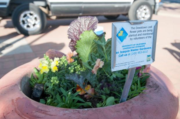 San Joaquin County Master Gardeners get Downtown Lodi ready for winter