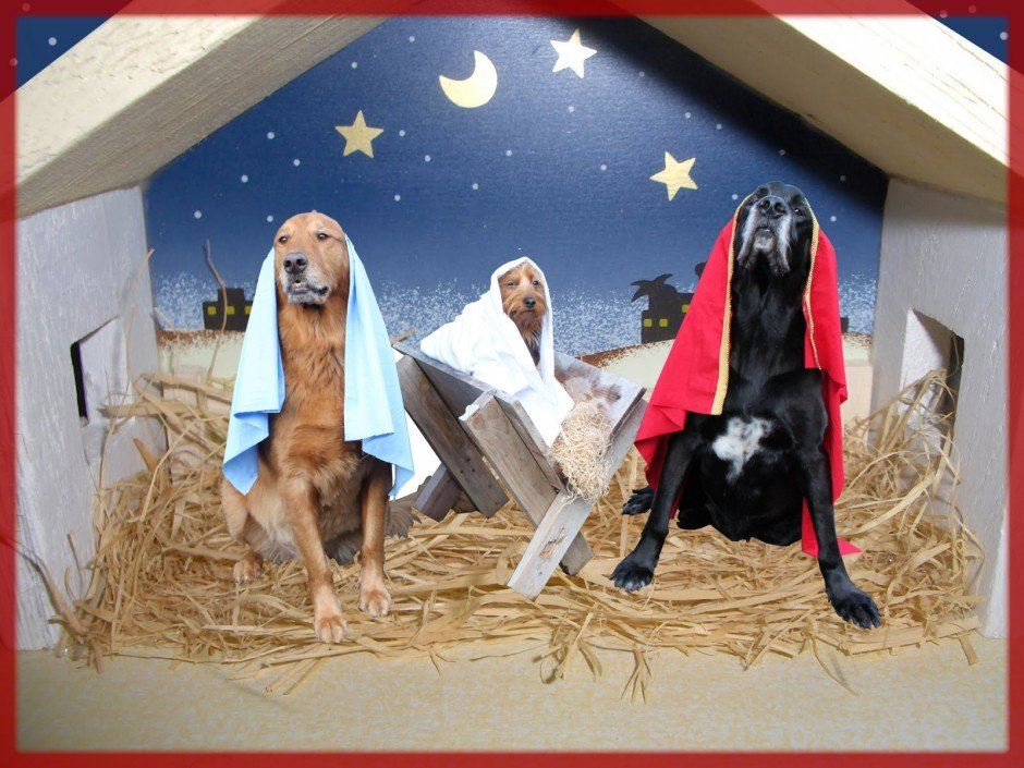 Nativity Puppies