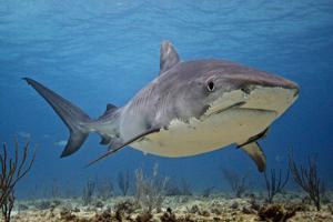 Dean Machado explores the ocean depths
