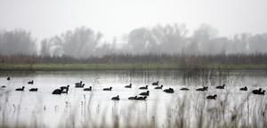 Galt Winter Bird Festival takes flight Jan. 29