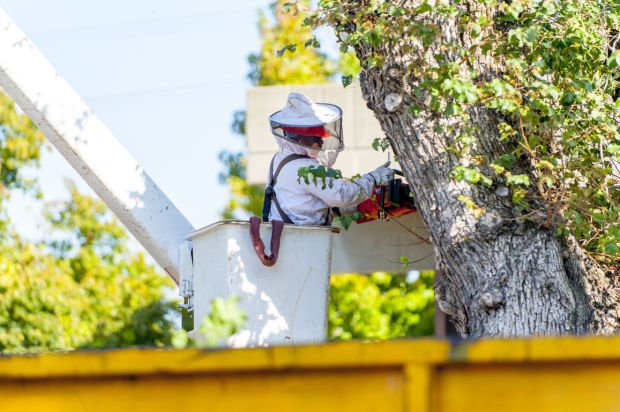 Professional tree removal in Lodi