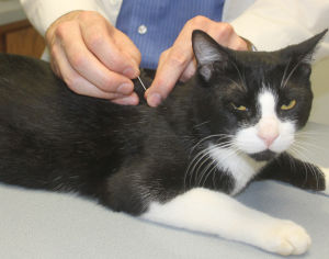 Woodbridge veterinarian John Lindsey uses acupuncture to help pets fight pain, heal illness