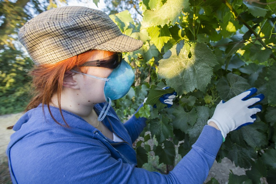 Toiling in the vineyards