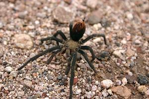Celebrate spiders at the 14th annual Tarantula Festival