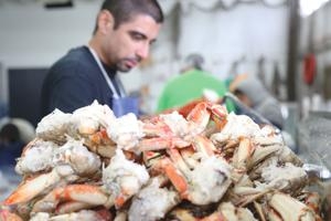 From the ocean to Lodi: A crab's incredible journey