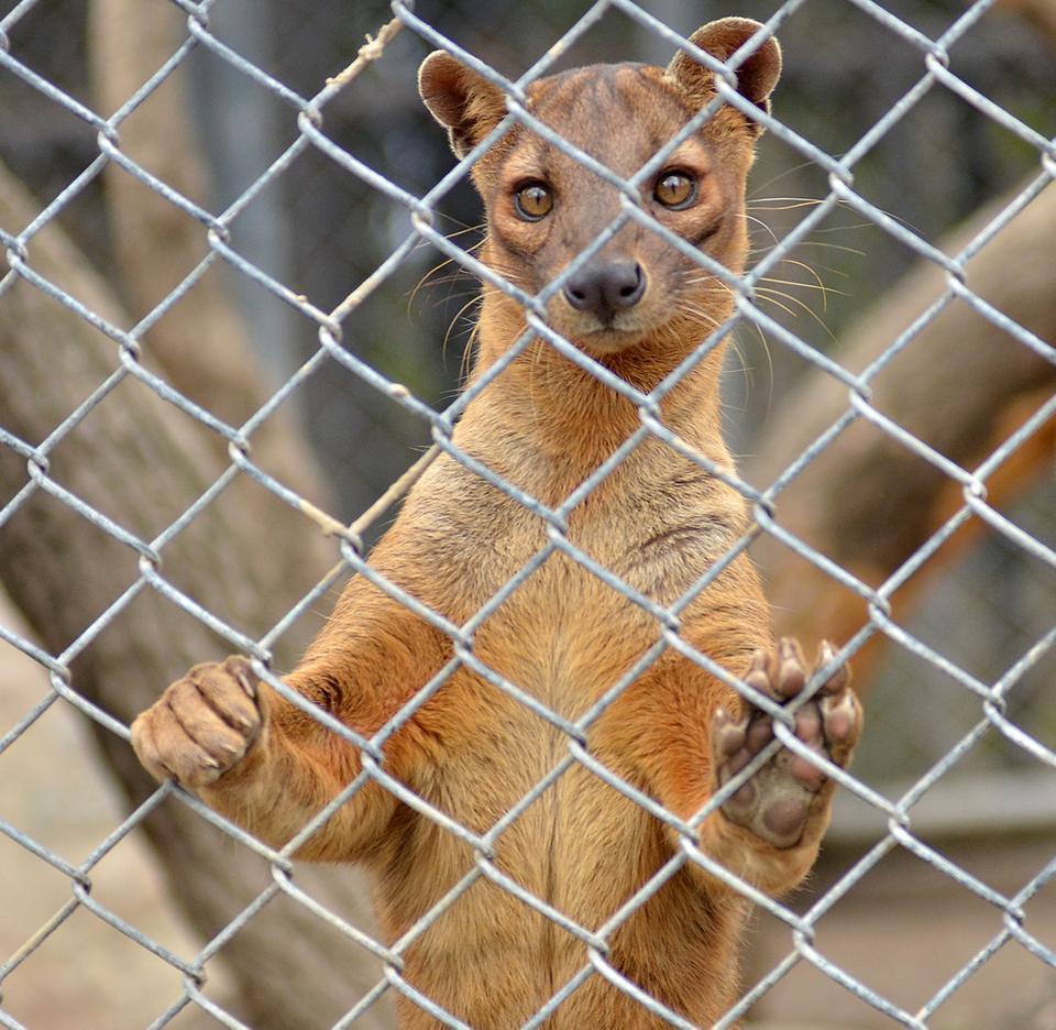 7 News Denver Zoo: Children Monkey Around At Micke Grove Zoo's 2014 Winter