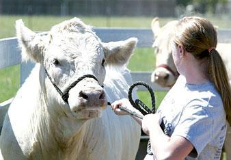 Local students getting ready for county fair