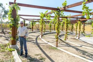 St. Jorge Winery prepares to fight ruling