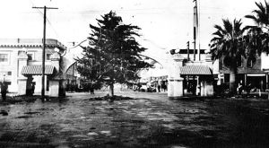 Lodi rallies around magnolia tree for 1913 Christmas