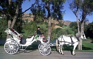Jazz the horse and Lodis All Seasons Carriage Company land movie role