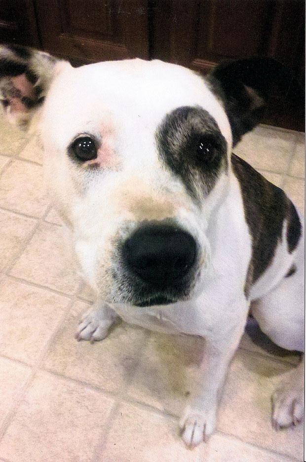 Woodbridge woman accuses deputy of releasing lost dogs in 100-degree heat